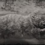 LAWF# 2 Legendary Beaver