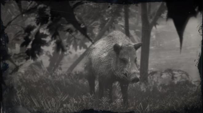 Red Dead Redemption: General - LAWF# 5 Legendary Boar image 2