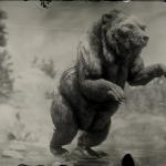 LAWF# 3 Legendary Bharati Grizzly Bear