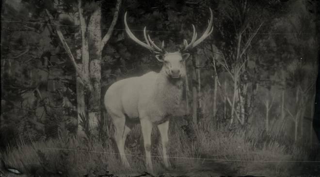 Red Dead Redemption: General - LAWF# 9 Legendary Elk image 1