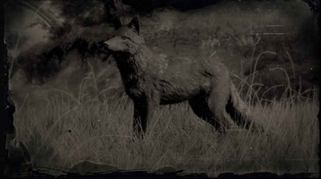 Red Dead Redemption: General - LAWF# 8 Legendary Coyote image 1