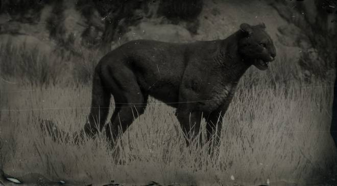 Red Dead Redemption: General - LAWF# 16 Legendary Cougar image 2