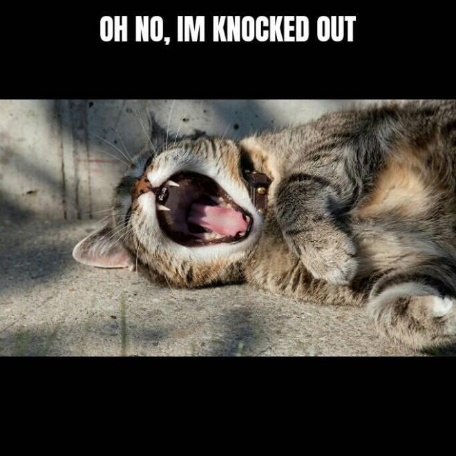 Dauntless: Memes - Noob: whats happening? image 2
