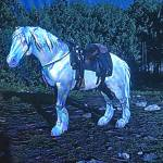 My new horse