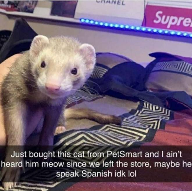 Entertainment: Memes - Spanish cat mouse? image 2