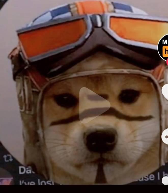 Fortnite: Battle Royale - Reni-dogge image 1