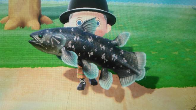 Animal Crossing: Posts - Fishing contests Dodo Code M9GXX come join image 2